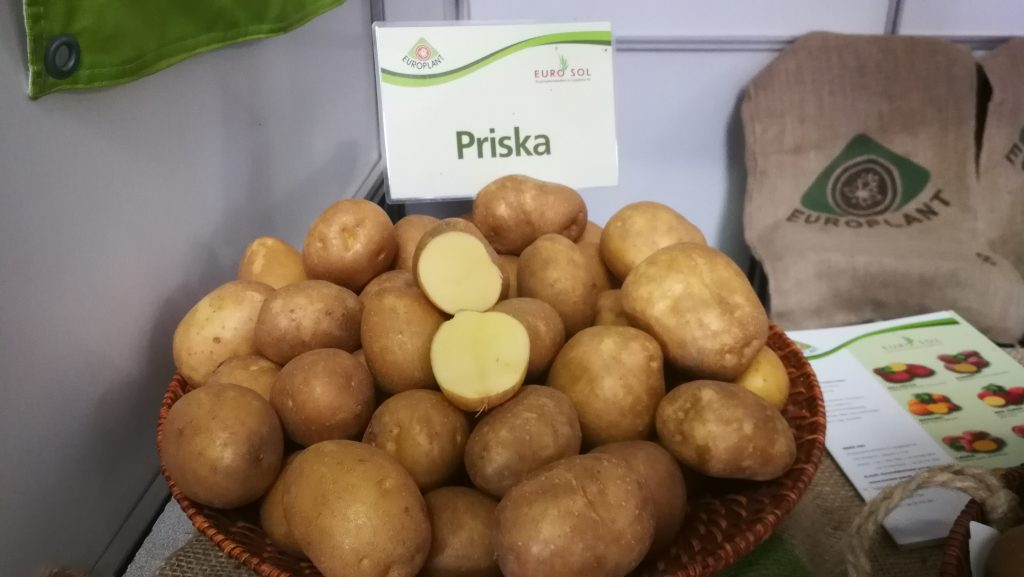 Bőtermő és jól tárolható chips fajta a PRiska