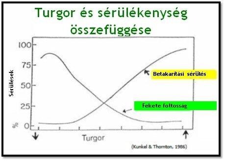 Turgor és a sérülékenység összefüggése